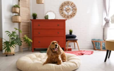 4 Tips for Renting with a Pet